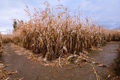 在路的一把玉米迷宫叉子在下降时间 免版税库存照片
