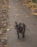 在路的一条狗 库存图片