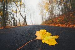 在路的下落的叶子 库存照片