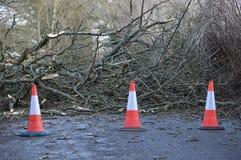 在路的下落的树 免版税库存照片