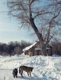 在路的两条狗在冬天 免版税库存照片