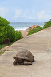 在路的乌龟 免版税图库摄影