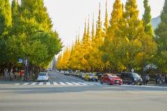 在路的交通在Icho Namiki大道的银杏树树下 免版税库存图片