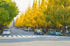 在路的交通在Icho Namiki大道的银杏树树下 库存图片