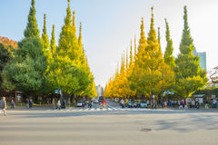 在路的交通在Icho Namiki大道的银杏树树下 免版税图库摄影