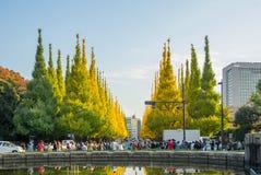 在路的交通在Icho Namiki大道的银杏树树下 库存照片