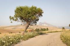在路的偏僻的树 库存图片