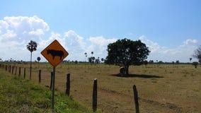 在路的公牛横穿向梅里达,墨西哥 免版税库存图片