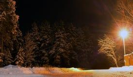 在路的前光夜 库存图片
