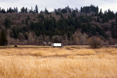 在路的半卡车在黄色草和青山之间 库存图片