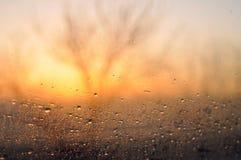 在路的多雨早晨 库存图片