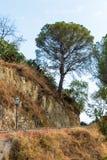 在路的大树 免版税库存照片