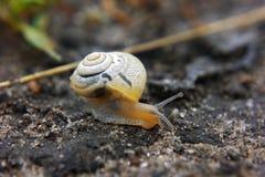 在路的小棕色婴孩蜗牛 库存图片
