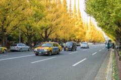 在路的很多汽车在Icho Namiki大道的银杏树树下 免版税库存图片