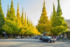在路的很多汽车在Icho Namiki大道的银杏树树下 免版税库存照片