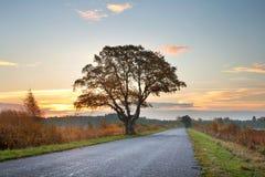 在路的树剪影 免版税库存图片