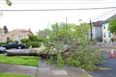 在路的树在最近风暴以后在北加利福尼亚 免版税库存照片
