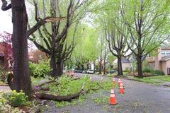 在路的树枝在最近风暴以后在北加利福尼亚 库存图片