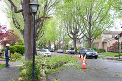 在路的树枝在最近风暴以后在北加利福尼亚 免版税库存图片