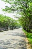 在路的每一边隧道绿色树 免版税库存照片