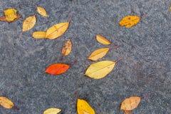 在路的湿五颜六色的秋天叶子 免版税图库摄影