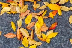 在路的湿五颜六色的秋天叶子 免版税库存照片