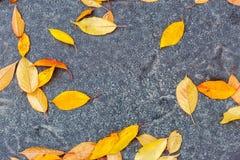 在路的湿五颜六色的秋天叶子 库存照片