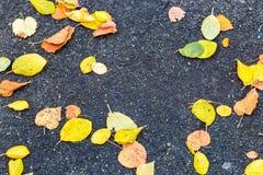 在路的湿五颜六色的秋天叶子 免版税库存图片