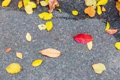 在路的湿五颜六色的秋天叶子 库存图片