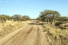 在路的瞪羚 库存照片