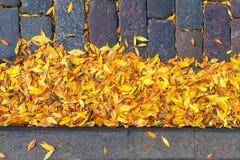 在路的石头的叶子 库存图片
