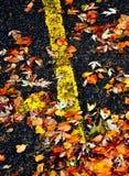 在路的秋天叶子 免版税库存图片