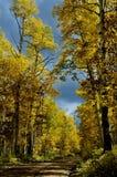 在路的秋天桦树向Dibé Nitsaa,登上Hesperus,圣Juans,科罗拉多 库存照片