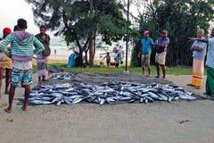在路的自然力鱼市 渔夫出售金枪鱼,人们天抓住会集了  免版税库存照片