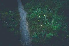 在路的萤火虫在森林里 免版税库存照片
