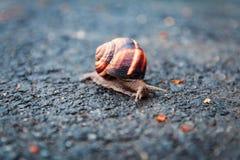 在路的蜗牛在雨中 免版税库存图片