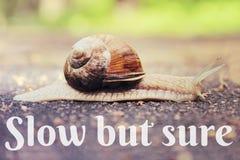 在路的蜗牛定了调子与文本的葡萄酒样式 免版税库存图片