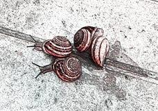 在路的蜗牛 例证 免版税库存图片