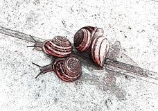 在路的蜗牛 例证 免版税库存照片