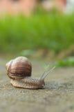 在路的蜗牛 库存图片