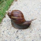 在路的蜗牛 免版税库存照片
