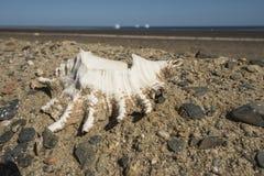 在路的边的巧克力精炼机贝壳有海的在背景中 库存照片