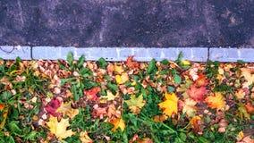 在路的遏制在秋天在城市很多黄色和绿色叶子和草 写的文本纯净的沥青 的treadled 免版税图库摄影