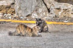 在路的野生猫 免版税库存照片
