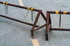 在路的铁树篱 免版税库存照片