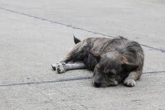 在路的黑和棕色狗 库存图片