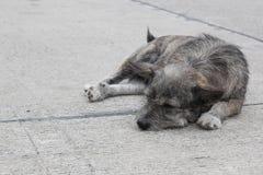 在路的黑和棕色狗 库存照片