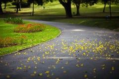 在路的黄色瓣 免版税图库摄影