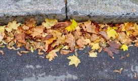 在路的黄色秋叶 免版税库存照片