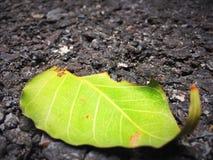 在路的绿色秋天 免版税库存照片